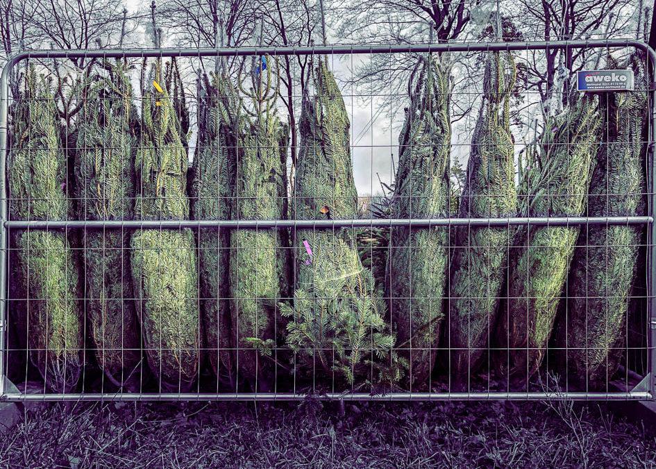 Weihnachtsbaum mit Mehrwert